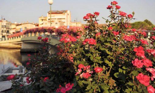 grado16-fiori-pont-schius-barc_Stepanovska