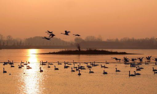 natur-uccel-lagun_cign1_hansbenn-CC0@px